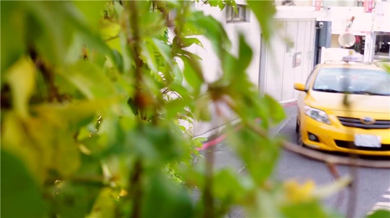 窺視:械葉牽牛(Ipomoea cairica)。侯志仁 & 鄧信惠,《植物眼中的臺北》(影像截圖),2018,錄像裝置、複合媒材,尺寸視空間而定。錄影:冼蔚然;剪接:潘世豪