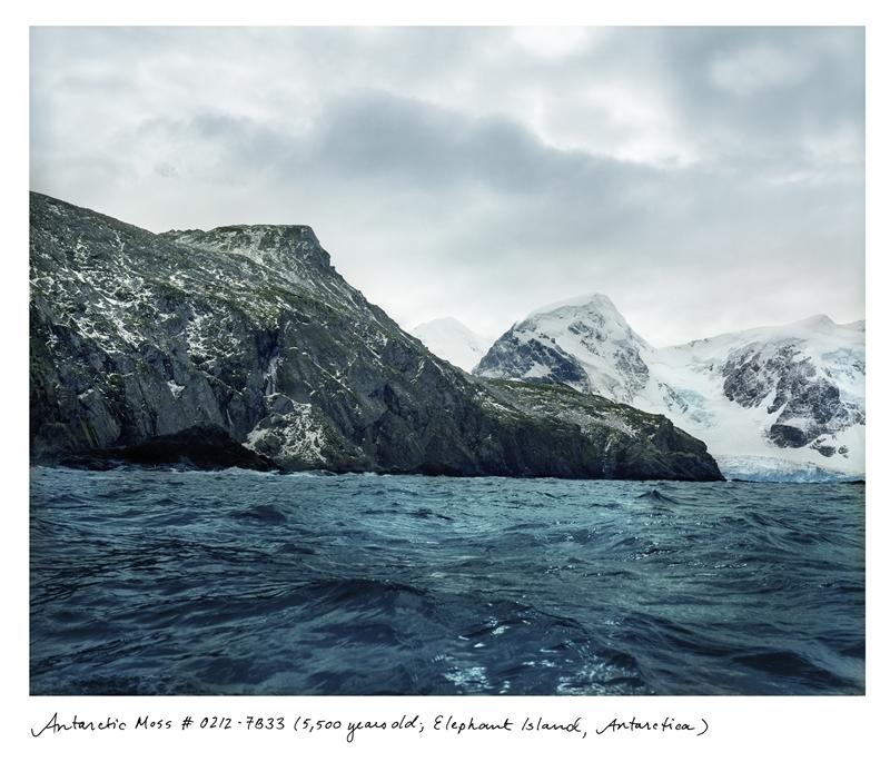 瑞秋.薩斯曼,《世界上最古老的生物》,〈南極蘚 #1202-7B33(五千五百歲,象島,南極洲)〉,2004–2014,中片幅負片的數位彩色印刷,111.76×137.16公分