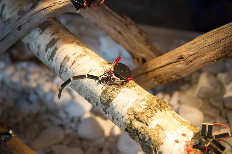 陳珠櫻+太陽能昆蟲生態箱工作坊,法國第八大學,《新伊甸園——太陽能昆蟲生態箱》,2015–2018,聲光互動裝置,160×80×45公分