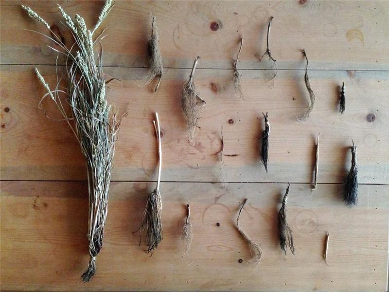 以雜草根製作的「草根筆」