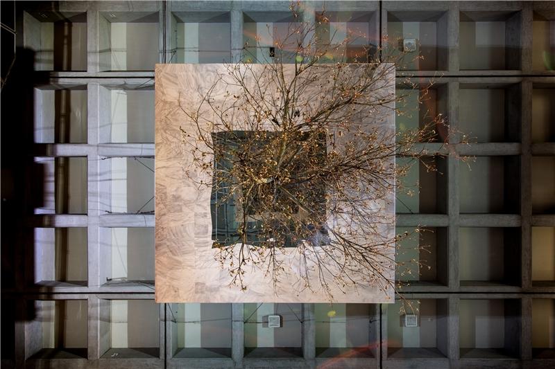 亨利克.赫肯森,《顛倒的樹(映射)》,2018,杜英、鋼、玻璃鏡面、不鏽鋼鏡面、鋼索、木板、溼度計、澆灌系統,尺寸視空間而定