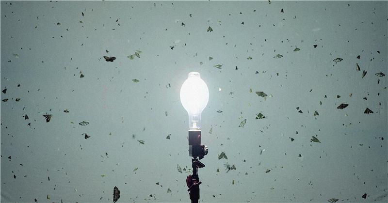 亨利克.赫肯森,《光盲》,2018,雙頻道錄像,彩色、有聲,蝴蝶框