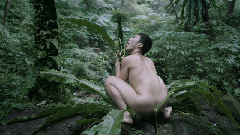 鄭波,《蕨戀2》,2018,錄像,彩色、有聲,片長20分30秒