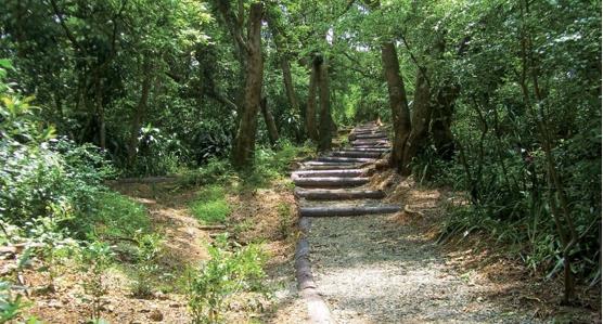 搶救都市生態孤島——景美山仙跡岩海巡署支線手作步道走讀