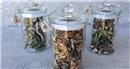 跨界對談:雜草╳青草藥╳印度香料