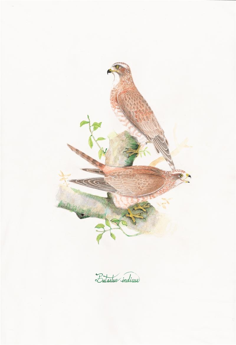 Wu Ming-Yi, A Buzzard, A Carnivore, and Seven Juveniles, 2018, color pencil, paper, 38×26 cm