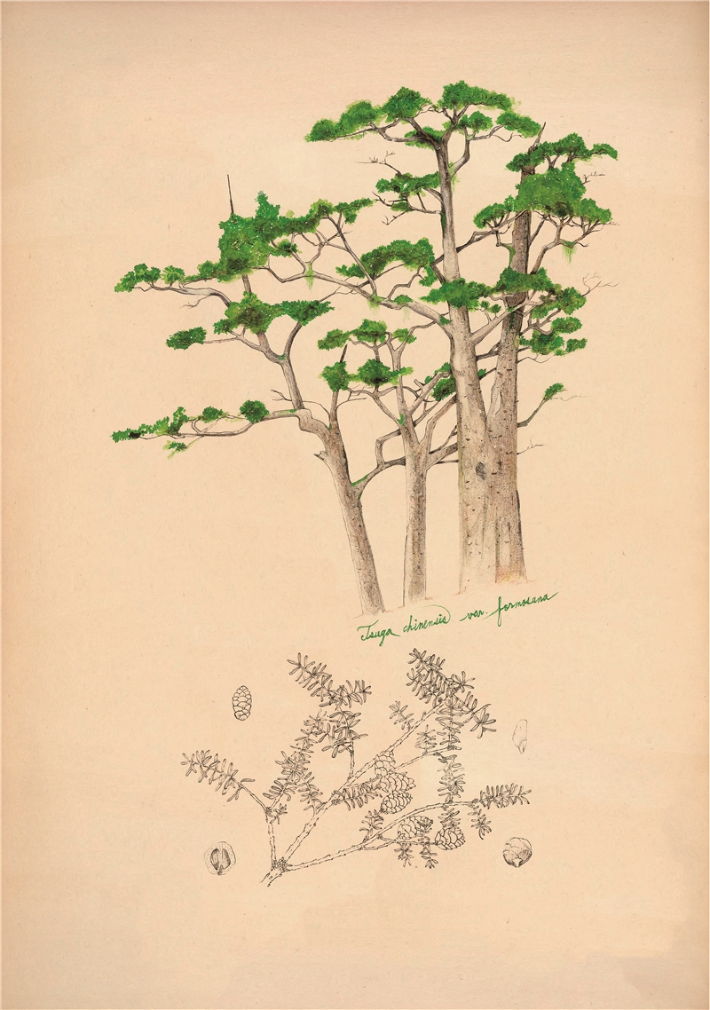 Wu Ming-Yi, From the Ice Shield a Forest Grew, 2018, color pencil, paper, 38×26 cm